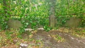 В проливном дожде с окликом, поток воды пропускает под загородкой движение медленное сток-видео