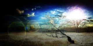 В пустыне Стоковые Изображения RF