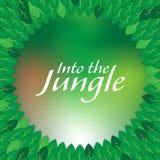 В рамку разрешения джунглей Стоковая Фотография