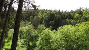 В древесинах Стоковая Фотография RF
