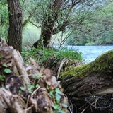 В древесинах стоковое изображение rf
