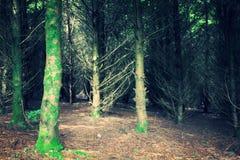 В древесины Стоковые Фотографии RF