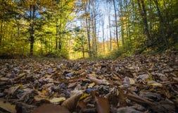 В древесины Стоковая Фотография RF