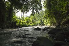 В реке с взглядом к ricefields в Ubud, Бали, Индонезия Стоковые Изображения