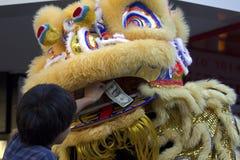 В рот льва Стоковое Изображение RF