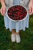 В руках девушки большой дуршлаг свежих вишен Новый сбор вишен с водой падает Фото в саде Стоковые Фотографии RF
