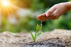 В руках деревьев растя саженцы Дерево удерживания руки предпосылки зеленого цвета Bokeh женское на консервации леса травы поля пр стоковые фотографии rf