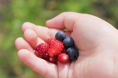 В руке клубник и голубик ягод ребенка Стоковое фото RF