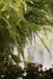В саде стоковые фотографии rf