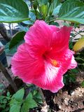 В саде Стоковое Изображение RF