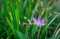 В саде Стоковое Фото