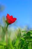 В середине цветочного сада природы и красочных цветков Стоковые Изображения RF