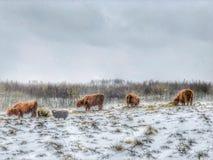 В сжатии зимы стоковые фотографии rf