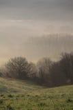 В тумане Стоковые Изображения RF