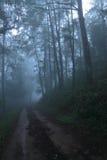 В туманное и глубокий в лесе Стоковое Фото