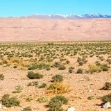 в ущелье Марокко Африке todra и деревне Стоковые Фотографии RF