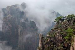 в форме Нечетн сосна на стене на туманный день, держателе утеса Huangshan стоковые изображения