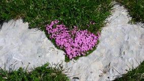в форме Сердц wildflowers на утесе Стоковые Фото