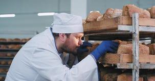 В хлебопеке шеф-повара пекарни главном проверяя качество хлеба после того как она принимала от промышленной печи, он смотря видеоматериал
