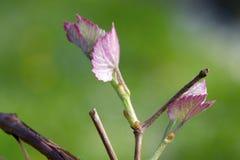 В цветени Стоковые Изображения RF