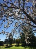 В цветени Стоковые Фотографии RF