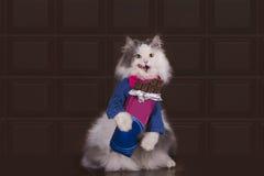 Влюбленности кота для еды шоколада Стоковое фото RF