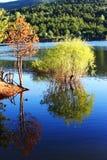 Влюбленность воды стоковая фотография rf