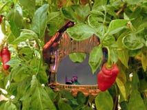 Влюбленность гоблинов Стоковое Изображение