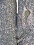 Влюбленность дерева стоковое фото