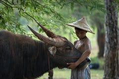 Влюбленность детей к буйволу под деревьями Стоковая Фотография