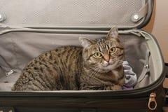 Влюбленность кота киски скучая по вам Стоковые Фото