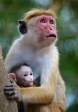 Влюбленность матерей Стоковое фото RF