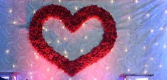 влюбленность подняла Стоковое Фото