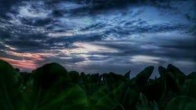 Влюбленность природы стоковое фото rf