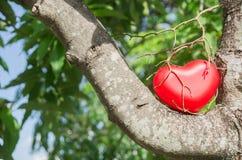 влюбленность роста приятельства креста предпосылки акации изолированная сердцем доработала белизну вала темы раздела кец фото вти Стоковая Фотография