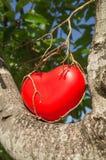 влюбленность роста приятельства креста предпосылки акации изолированная сердцем доработала белизну вала темы раздела кец фото вти Стоковое Изображение RF