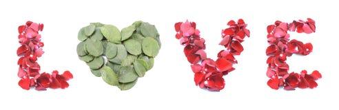 Влюбленность сделанная изолированной розы на белой предпосылке Стоковые Изображения RF