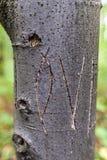 Влюбленность слова вписанная на дереве Стоковая Фотография