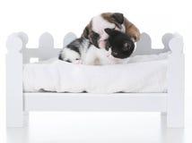 влюбленность щенка и котенка Стоковое Фото