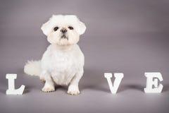 Влюбленность щенка Стоковая Фотография