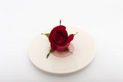 Влюбленность любит еда Стоковое фото RF