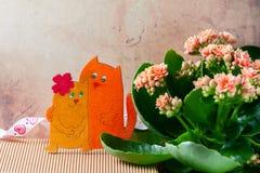 Влюбленныеся коты, день ` s валентинки Розовые цветки kalanchoe Стоковое Изображение RF