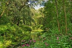 В джунглях Стоковые Изображения
