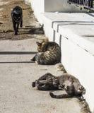 В Chersonesos коты живут беспечальная жизнь стоковые изображения