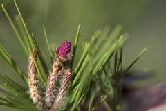В Coniferous лесе Стоковая Фотография RF