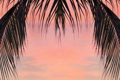 В-scape ладони кокоса выходит на предпосылку облака-scape Стоковые Фото