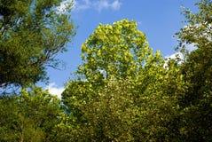 В Treetops вдоль научно-исследовательского парка университета стоковые фото