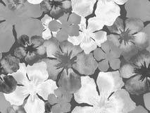 Гаваиская картина акварели Стоковое фото RF