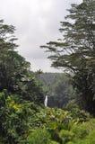 гаваиские джунгли Стоковые Изображения