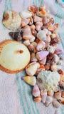 Гаваиские раковины стоковые изображения rf
